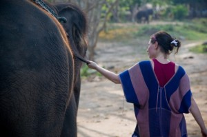 elephant and human walking peacefully